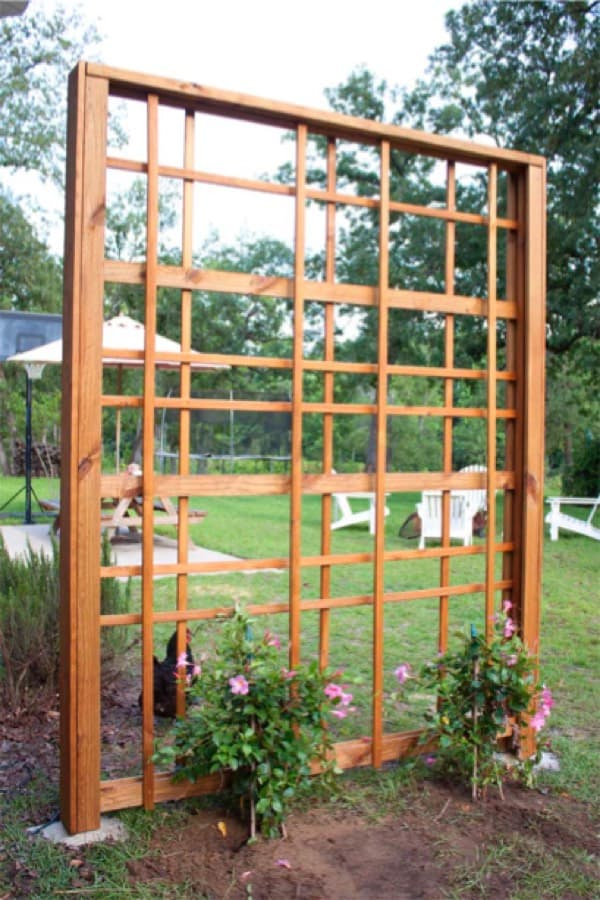 trellis wall ideas