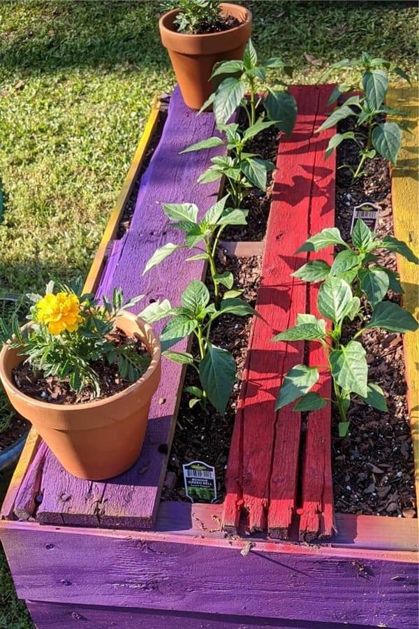 leftover pallets for raised flower beds