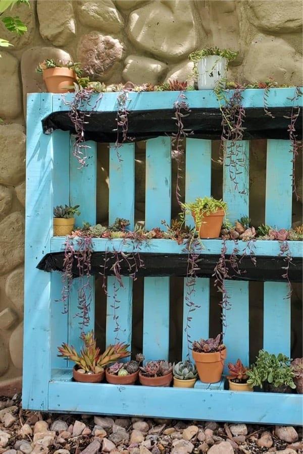 light blue pallet for succulent garden