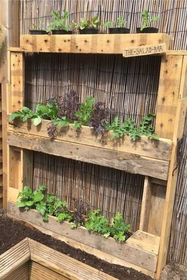 grow plants in diy pallet garden