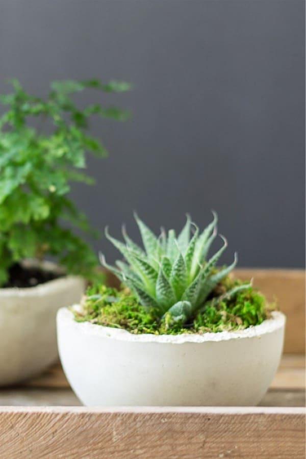 simple tutorial for mini concrete planter bowls