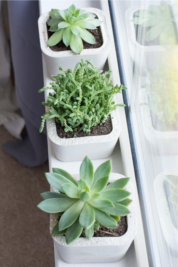 how to make a diy succulent planter