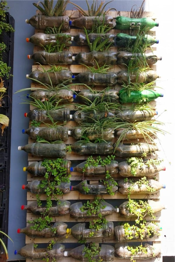 creative idea for cheap herb garden